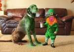 Real-life-leprechaun-dog.jpg