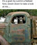 Goat in Ford.jpg